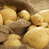 The Finns are going to seed potato in Pskov region