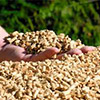 Omsk company to produce wood pellets jointly with Swiss partners