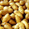 Swedes Launch in Kaliningrad Production Facility for Elite Seed Potato
