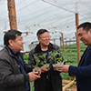 Chinese investors to erect greenhouses in Novgorod Region