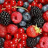 Iranian investors intend to embark on berry growing in Bryansk Region