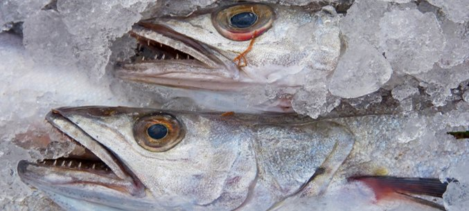 Russia's Frozen Fish Export To China Went Up By $295 mln