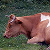 Chinese company to invest RUB 3 billion into Tomsk livestock breeding