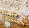 Authorities looking for an investor to invest in flour milling facilities in the Kaliningrad Region