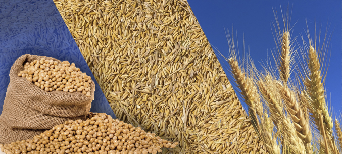 China Has Authorized Wheat and Soy Imports from The Russia
