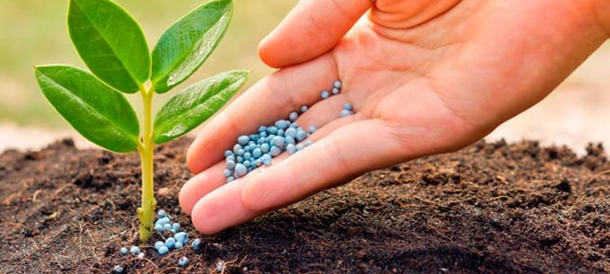 Saratov Region Is The Largest Exporter Of Nitrogen-Phosphate Fertilizer