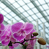 Chinese company to make beach umbrellas and grow orchids in Buryatia