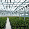 Construction of year-round greenhouse in Yakutia will start in late June