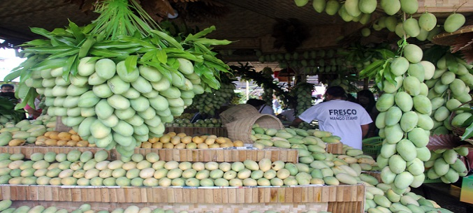 Philippines starts mango export to Russia in May
